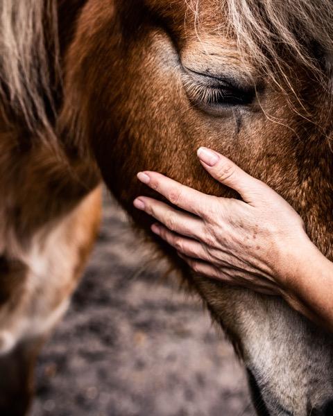 Natuurlijk Gecoacht - paardencoach